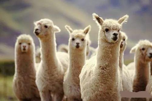 薅羊毛赚钱